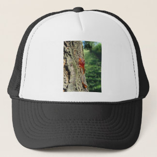 Closeup of pear tree excretion of gummy resin trucker hat