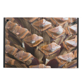 Closeup of pine cone cover for iPad air