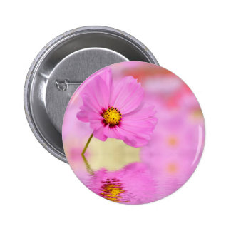 Closeup of pink cosmos flower above the water button