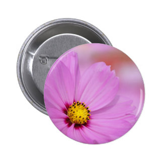 Closeup of pink cosmos flower buttons