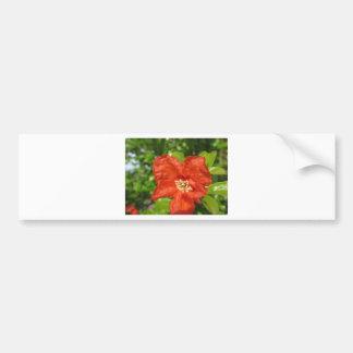 Closeup of red pomegranate flower bumper sticker