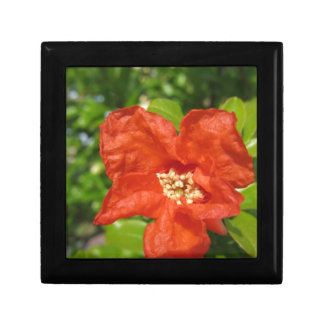 Closeup of red pomegranate flower gift box