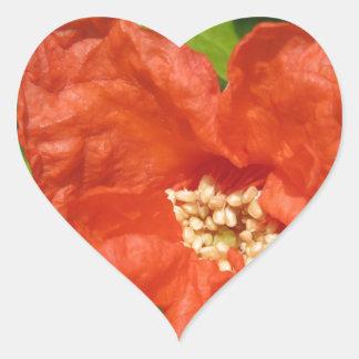 Closeup of red pomegranate flower heart sticker