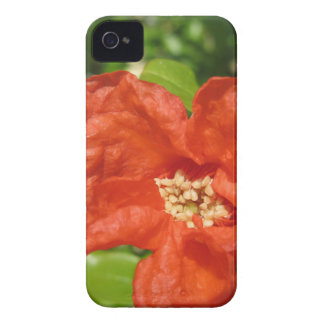 Closeup of red pomegranate flower iPhone 4 Case-Mate case