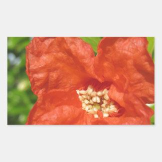 Closeup of red pomegranate flower rectangular sticker