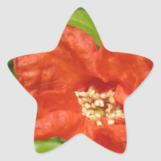 Closeup of red pomegranate flower star sticker
