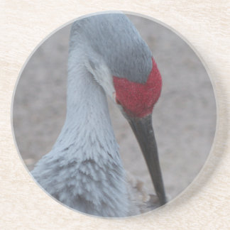Closeup of the face of a Sand Hill Crane Coaster