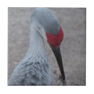 Closeup of the face of a Sand Hill Crane Tile