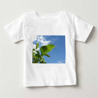 Closeup of walnut leaf lit by sunlight baby T-Shirt