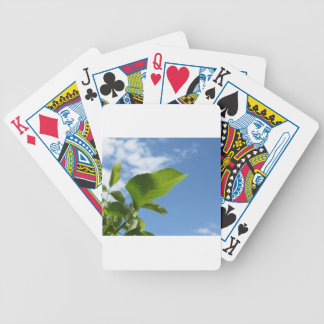 Closeup of walnut leaf lit by sunlight bicycle playing cards