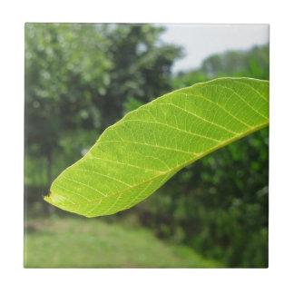 Closeup of walnut leaf lit by sunlight ceramic tile
