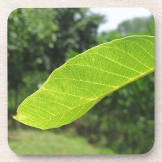 Closeup of walnut leaf lit by sunlight coaster