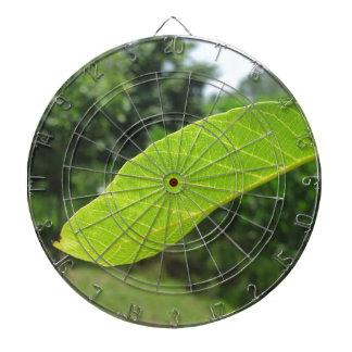 Closeup of walnut leaf lit by sunlight dartboard