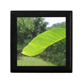 Closeup of walnut leaf lit by sunlight gift box