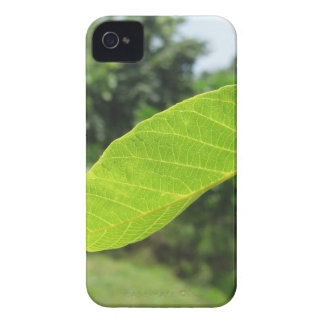 Closeup of walnut leaf lit by sunlight iPhone 4 cover