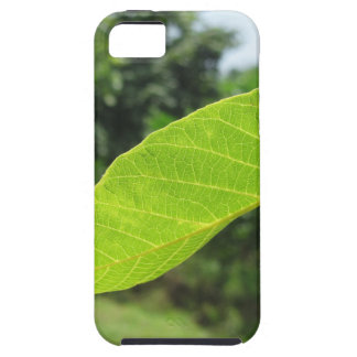 Closeup of walnut leaf lit by sunlight iPhone 5 cases