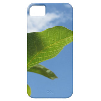 Closeup of walnut leaf lit by sunlight iPhone 5 cover