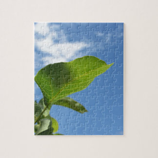 Closeup of walnut leaf lit by sunlight jigsaw puzzle