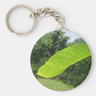 Closeup of walnut leaf lit by sunlight key ring