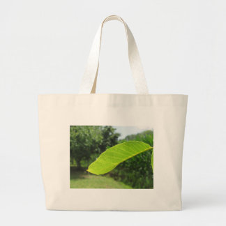 Closeup of walnut leaf lit by sunlight large tote bag