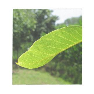 Closeup of walnut leaf lit by sunlight notepad