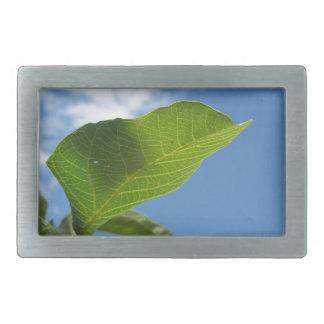 Closeup of walnut leaf lit by sunlight rectangular belt buckle