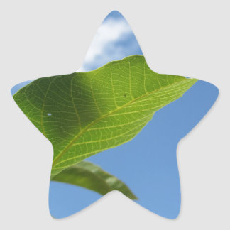Closeup of walnut leaf lit by sunlight star sticker