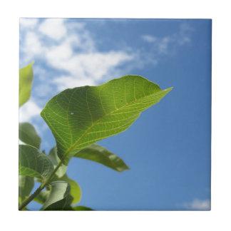 Closeup of walnut leaf lit by sunlight tile