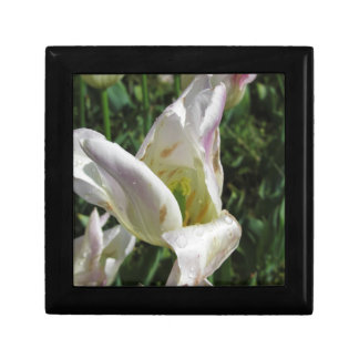 Closeup of white iris flower with droplets gift box