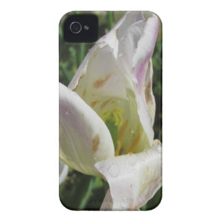 Closeup of white iris flower with droplets iPhone 4 Case-Mate cases