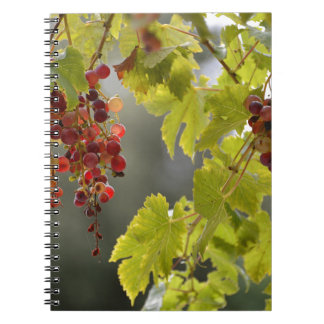Closeup red grapes among leaves spiral notebook