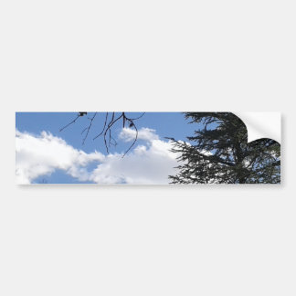 Cloud And Trees Bumper Sticker