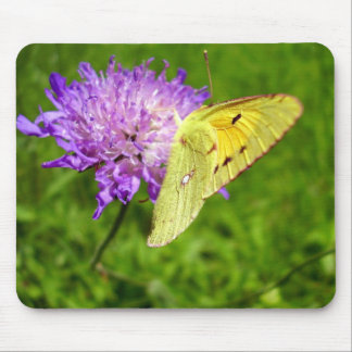 Clouded Yellow Butterfly Mouse Mat