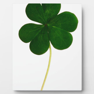 Clover Display Plaque