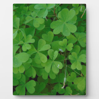 Clover Display Plaques