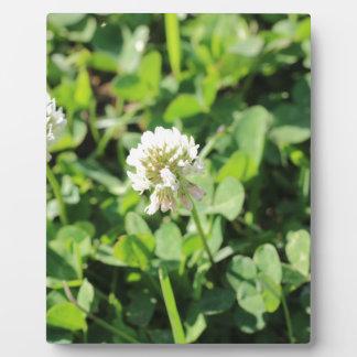 Clover & Flowers Pt 2 Plaque
