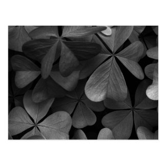 Clover leaves, infrared photo postcard