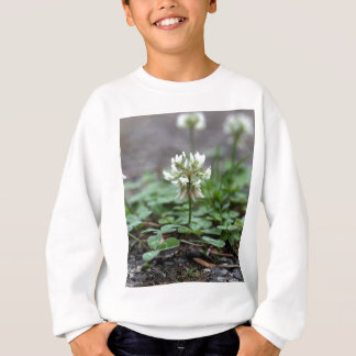 Clover on a tared road. t shirts