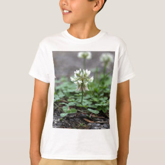 Clover on a tared road. tee shirts