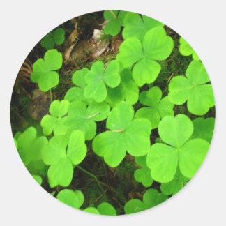 Clover Patch Round Sticker
