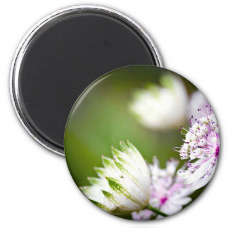 Clover vignette 6 cm round magnet