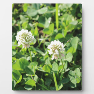 Clovers and Flowers Photo Plaques