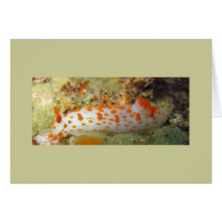 Clown Nudibranch Card