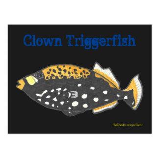 Clown trigger fish postcard