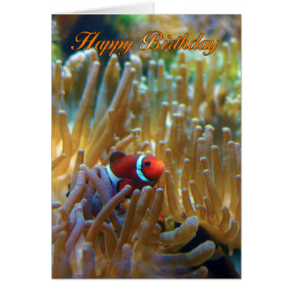 Clownfish Birthday Card - Photography Card - Happy