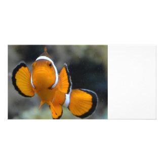 clownfish facing front card