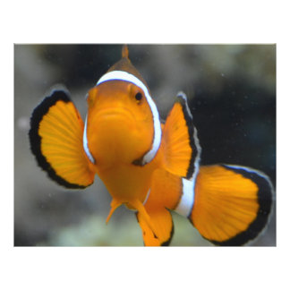 clownfish facing front flyer