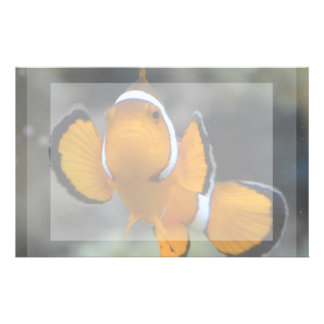 clownfish facing front personalised stationery
