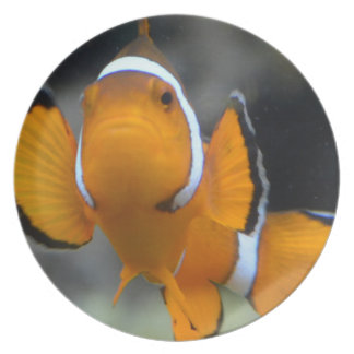 clownfish facing front plate