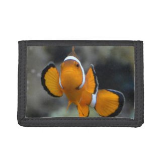 clownfish facing front trifold wallet